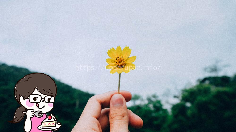 花のサブスクを選ぶ時のポイント4つ